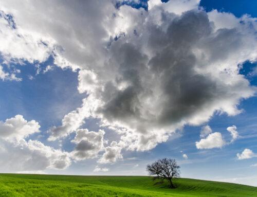 Cultura ambientale – I rifiuti agricoli